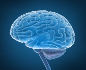 Brain and Stimuli